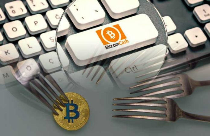 When the Fork Forks: BCH Updates You Need to Know | CryptoBuzz™